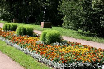 40 видов цветов, выращенных на «СПП» Пушкинское», украсят район этой весной