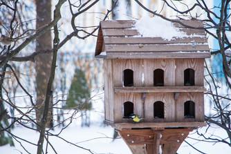 В Пушкине начали работу«птичьи столовые»