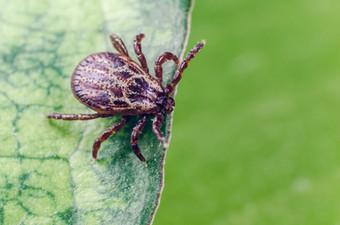 Более 9 тысяч человек с начала сезона пострадали от укусов клещей