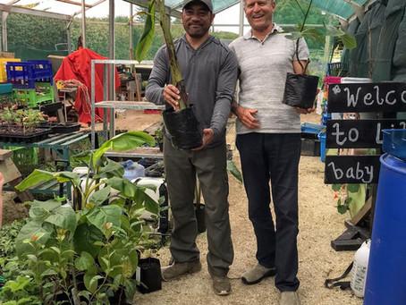 Indigenous Organic garden in Mangere