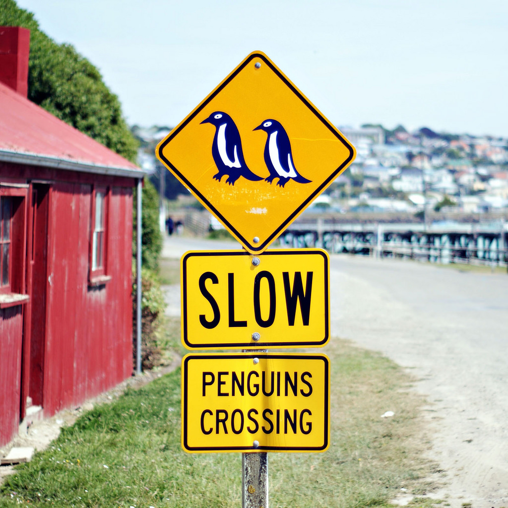 penguinCrossing