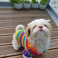Rainbow jumper