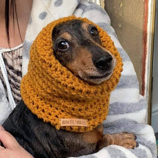 Dachshund small snood