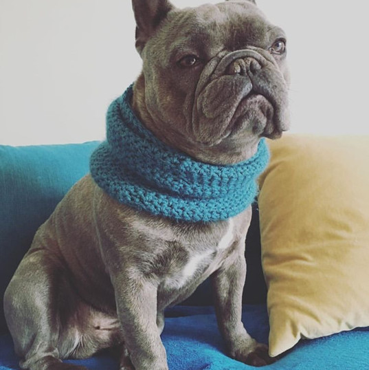 Frenchie medium snood