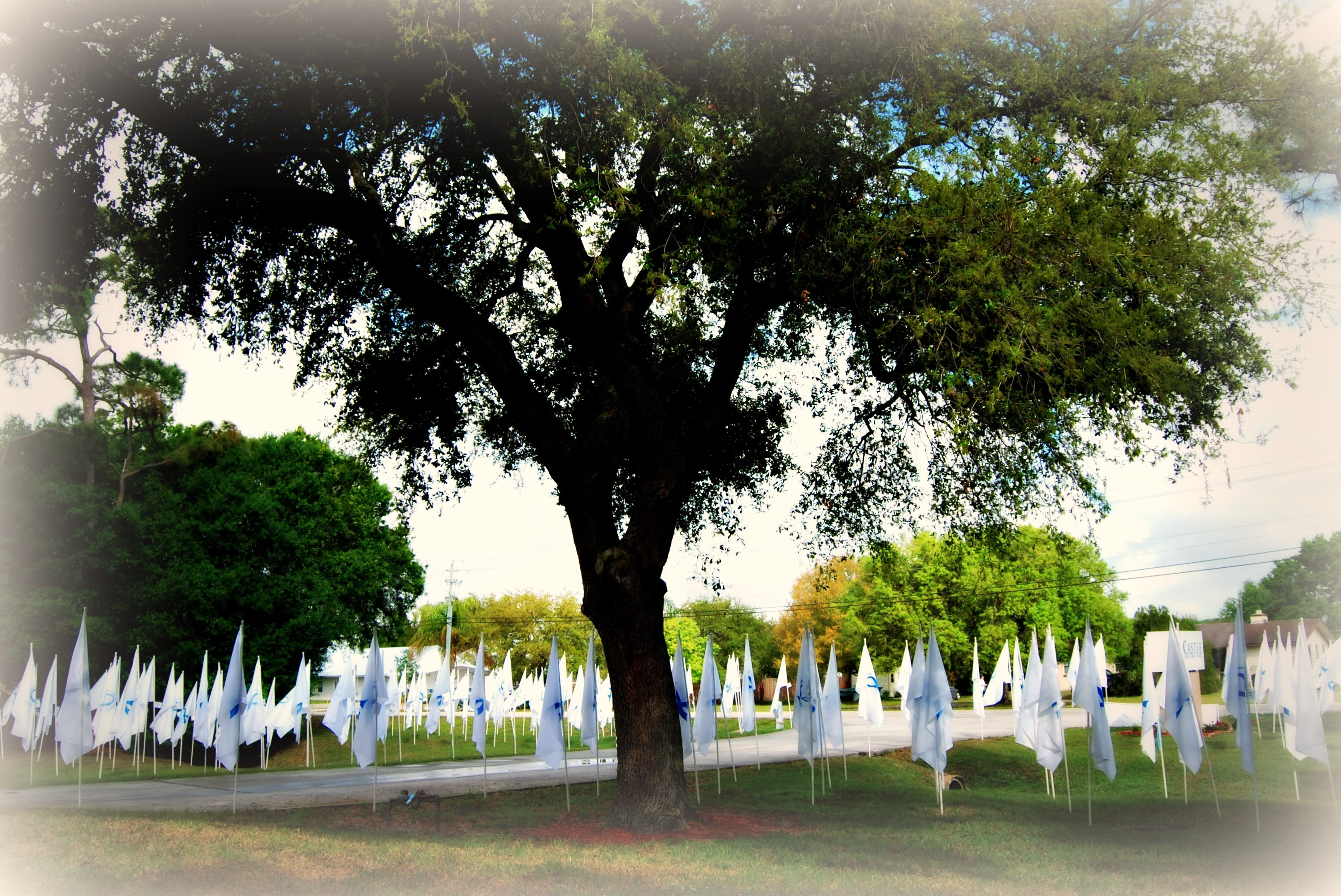 Memory Field 2012 (2)