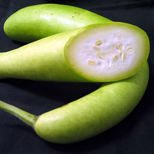 zucchina lunga00