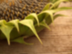 semi di girasole proprietà benefiche