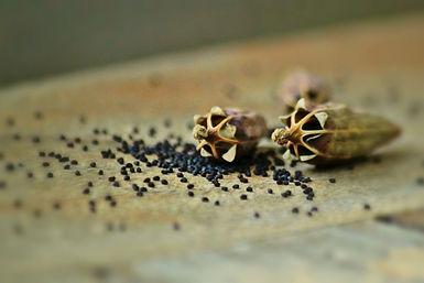 semi di papavero proprietà benefiche