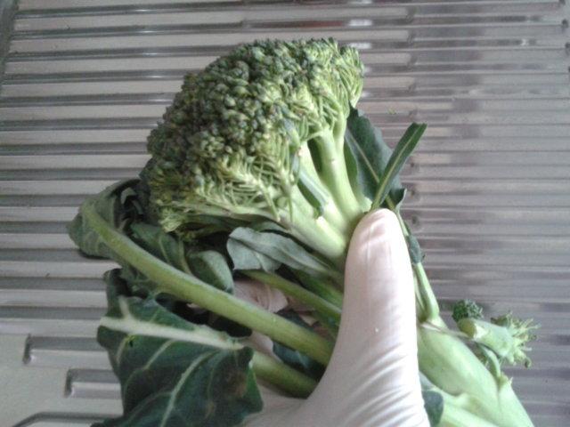 broccoli00