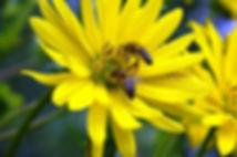miele proprietà benefiche