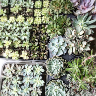 For the love of succulents 💚 #succulent