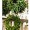 Thumbnail: Hand-tied Fresh Wreath