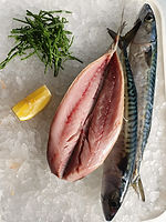 mackerel.jpeg