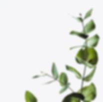 vertplant.jpg