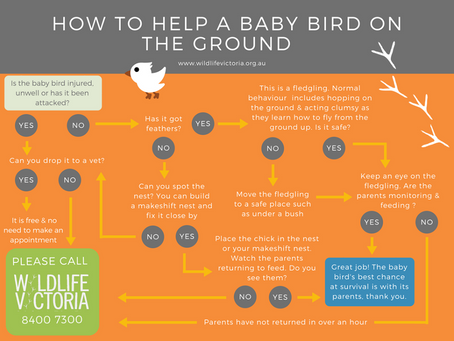 Some information on baby birds