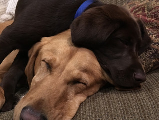 Cooper and Ryder