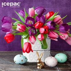 Icepac Pure   14,90€