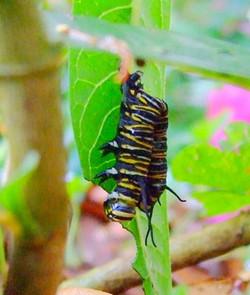 Jane Arnold Dead Larva