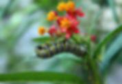 Tropical_1.jpg