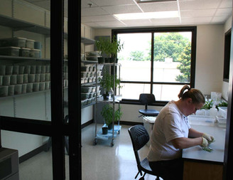 Butterfly Rearing Room