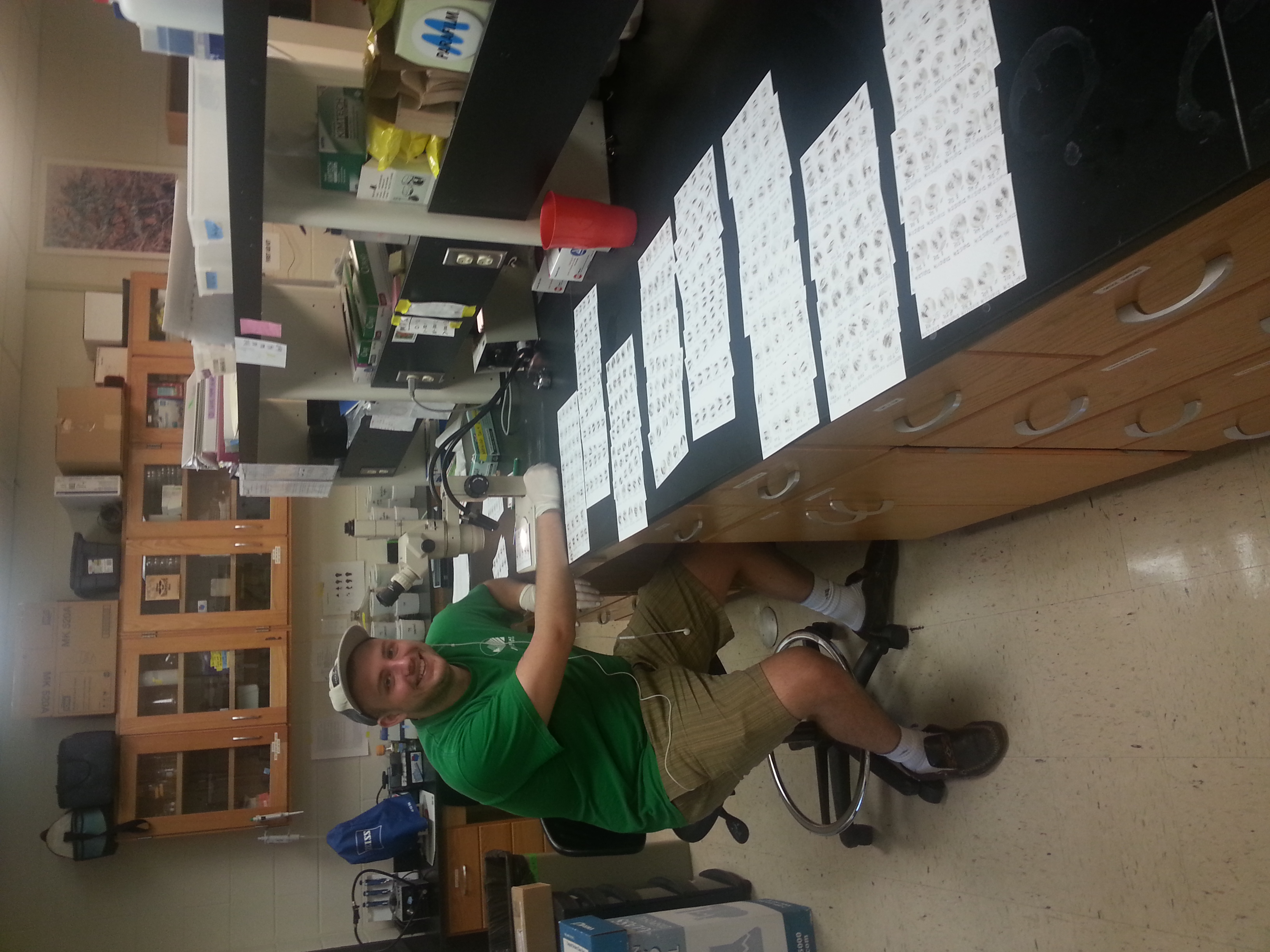 Michael Holden scores a table full of monarch samples from citizen scientists to track OE throughout