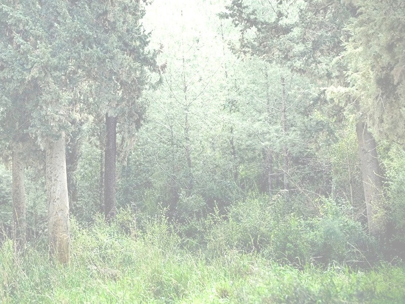 Tranquil forest_edited_edited.jpg