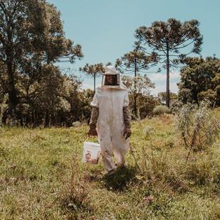 Man harvesting honey
