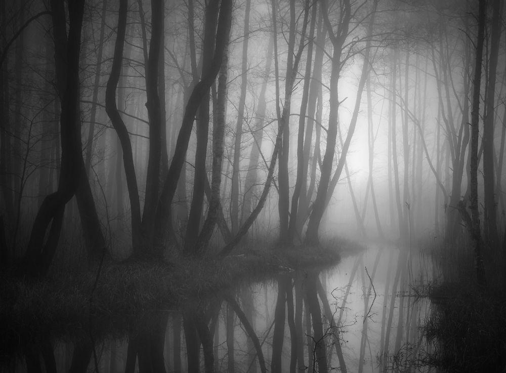 Paisaje en niebla que evoca angustia.