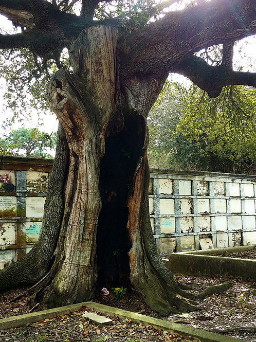 Spooky Tree guards Oven Tombs in New Orleans Cemeter