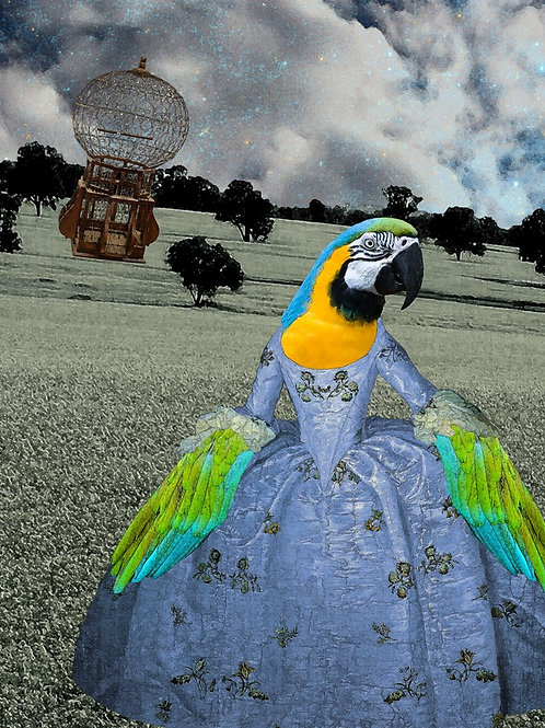 Blue Macaw Parrot as Rococo pet Princess