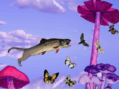 Pounce, Leap, Leopard Fish and Eat the Butterflies of Wonderland