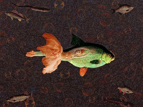 Fish Dance a la Klee