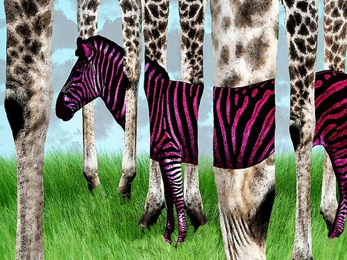 Zebra Stripes in a Giraffe Forest