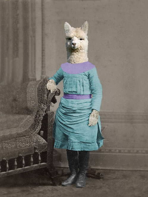 Little Alpaca, no Drama Llama in Victorian Photograph