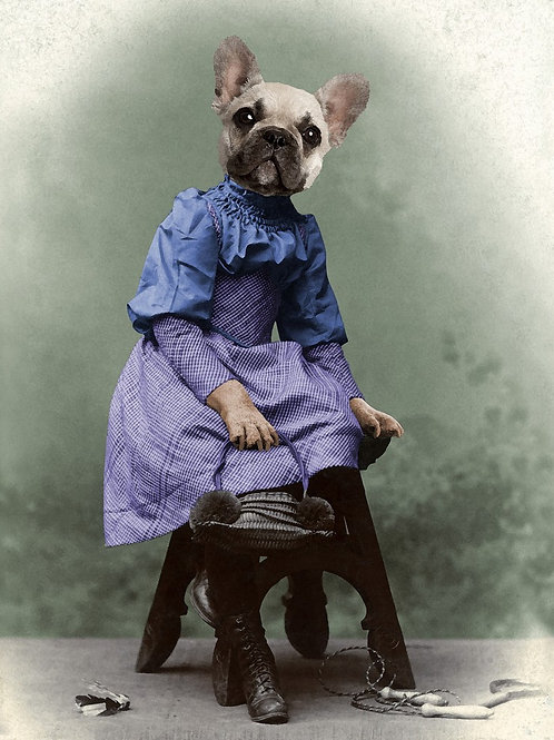 French Bull Dog as Victorian pet girl
