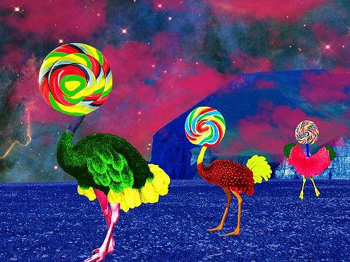 The Lollipop Flock