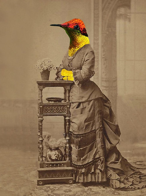 Hummingbird in Victorian Fashion as photograph
