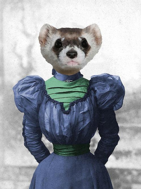 Lady Ferret as pet photograph