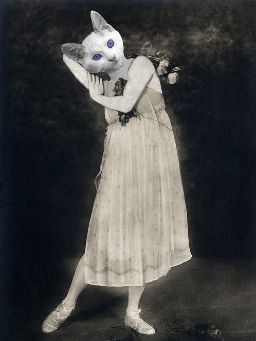 Victorian Dance Cat in Black and White Photograph