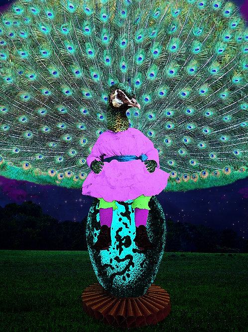 The Peacock as Egg Babysitter