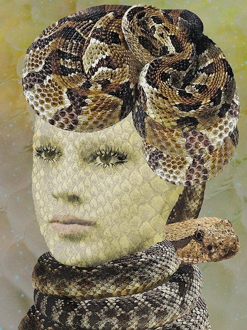 Snake in Medusa's Garden