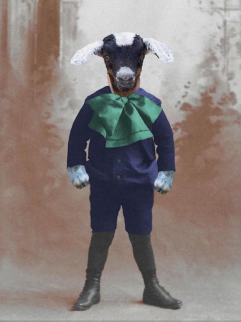 Portrait of a Goat Boy ready for Yoga