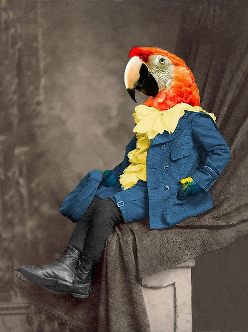 Red Macaw as Victorian Pet Portrait from Photograph