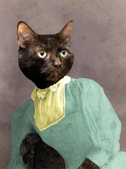 Pet Photograph of a Black Tortoiseshell Cat