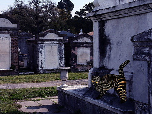 Voodoo Cat and the Cemetery Playground