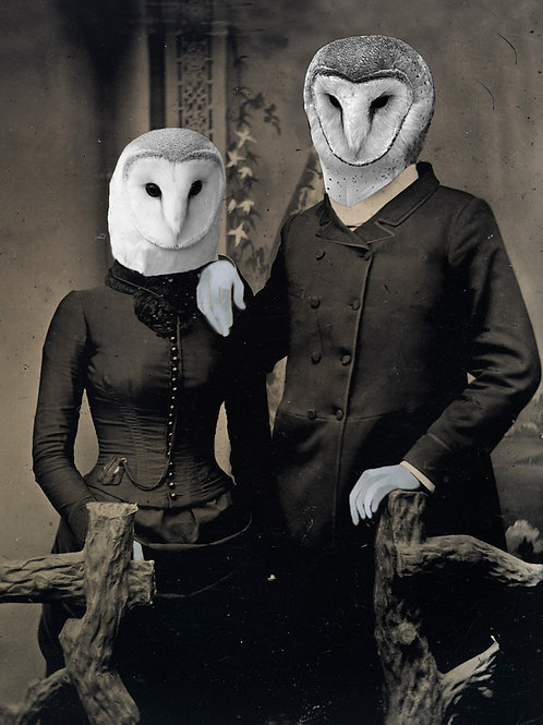 Snowy Owl meets her True Love in Photograph