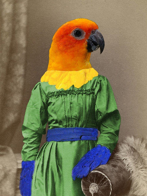 Sun Conure Parakeet custom dressed in Victorian Finery