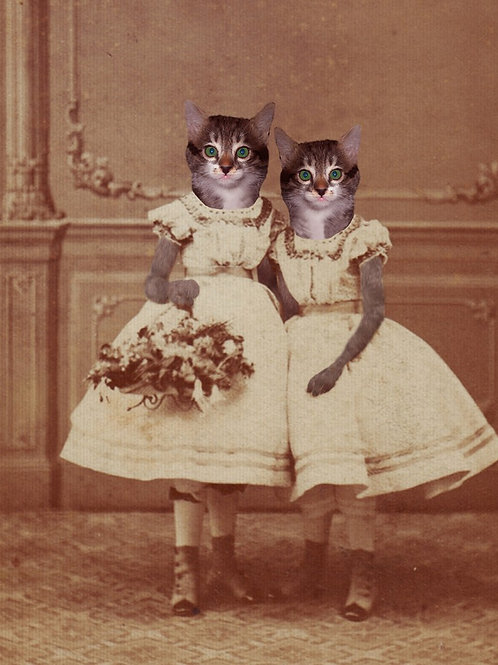 Photograph of Tabby Kittens as Victorian girls