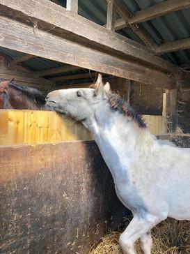 New Foal Pob