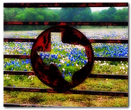 texas_blue_bonnets1 copy.png